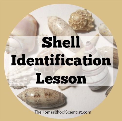 Last week, we emptied our bag of shells that we collected on our recent beach vacation to the Gulf Shores area in Alabama. Time for sea shell identification
