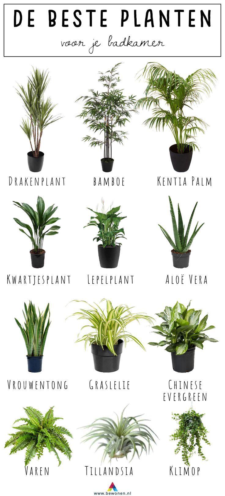 12x de beste planten voor je badkamer
