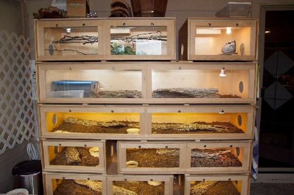 Snake Cage Stack Racers Snake Cages Snake Terrarium Reptile Room