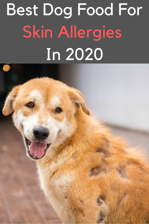 Best Dog Foods For Allergies In 2020 Dog Allergies Dog Food Allergies Dog Food Recipes