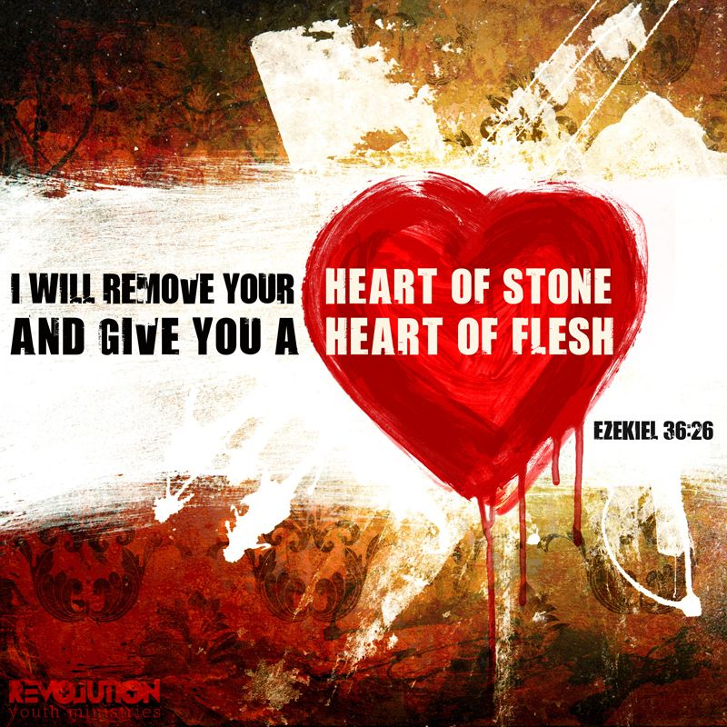 """""""I will remove your heart of stone and give you a heart of flesh."""" Ezekiel 36:26 //  #revyouthmin #scripture"""