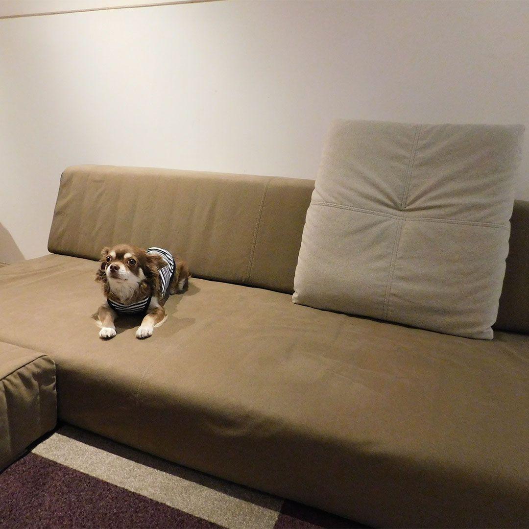 6/2(土)・3(日)、東京&大阪ショールームにてペットイベント「愛犬と一緒にローソファを試そう」を開催します!写真は先月ご来店いただいたワンちゃんたち~!イベントは完全予約制・先着順となっております。リンク先の詳細ページにてご確認ください!