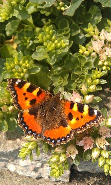 Vlinder in eigen tuin