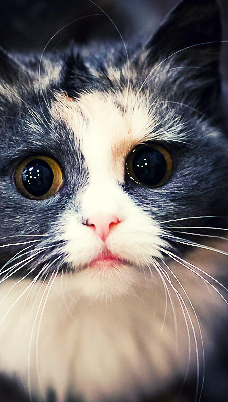 Descargar fondos de pantalla Gato Kawaii HD para móvil. en