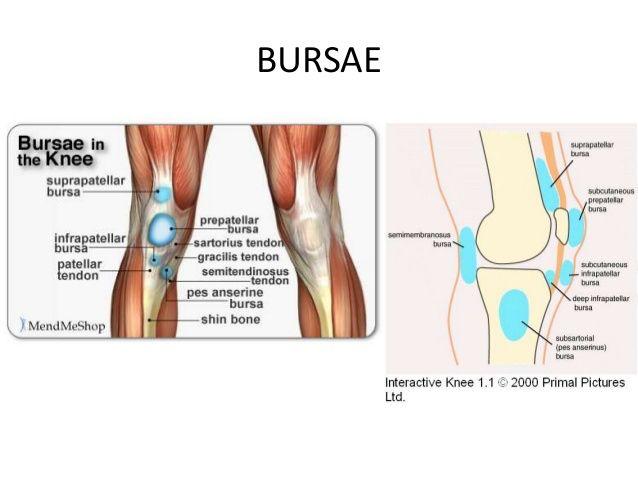 Bursa of the knee atpre pt pinterest bursa bursa of the knee ccuart Choice Image
