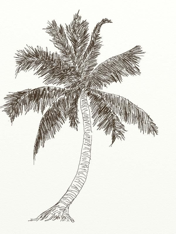 How To Draw Coconut Tree 4 Jpg 600 800 Coconut Tree Drawing Tree Painting Easy Trees Art Drawing