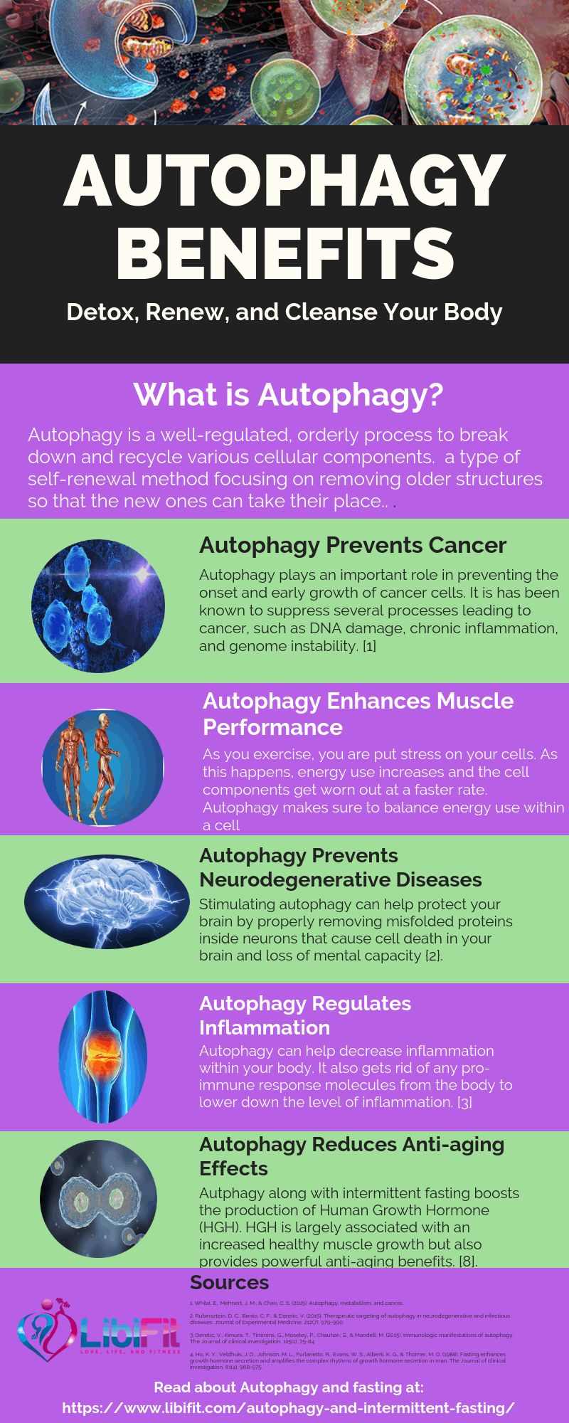 Detox and Renew Your Body with Autophagy and Intermittent