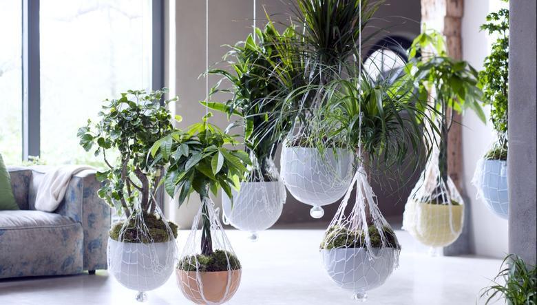 Jak Eksponowac Kwiaty Doniczkowe W Domu Galerie Foto Urzadzamy Pl Indoor Plants Indoor Trees Plants