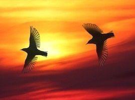 Dualseele - Die Aufforderung zur Verwandlung   Dualseele