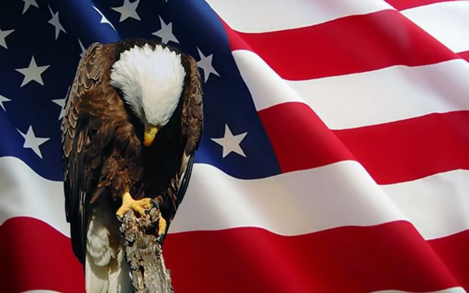 Image result for memorial day eagle