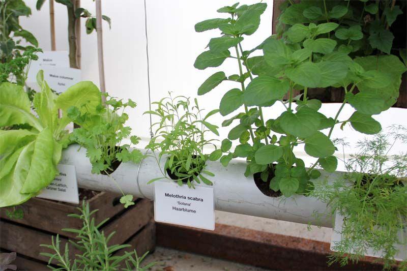 regenrohr ungew hnliche pflanzgef e pflanzen garten deko und pflanzgef e. Black Bedroom Furniture Sets. Home Design Ideas