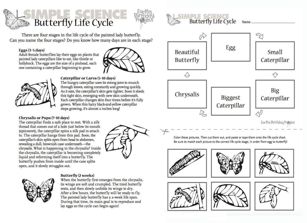 Printable Worksheets the grasshopper and the ant worksheets : Butterfly Life Cycle Worksheet. Butterfly Life Cycle Book ...