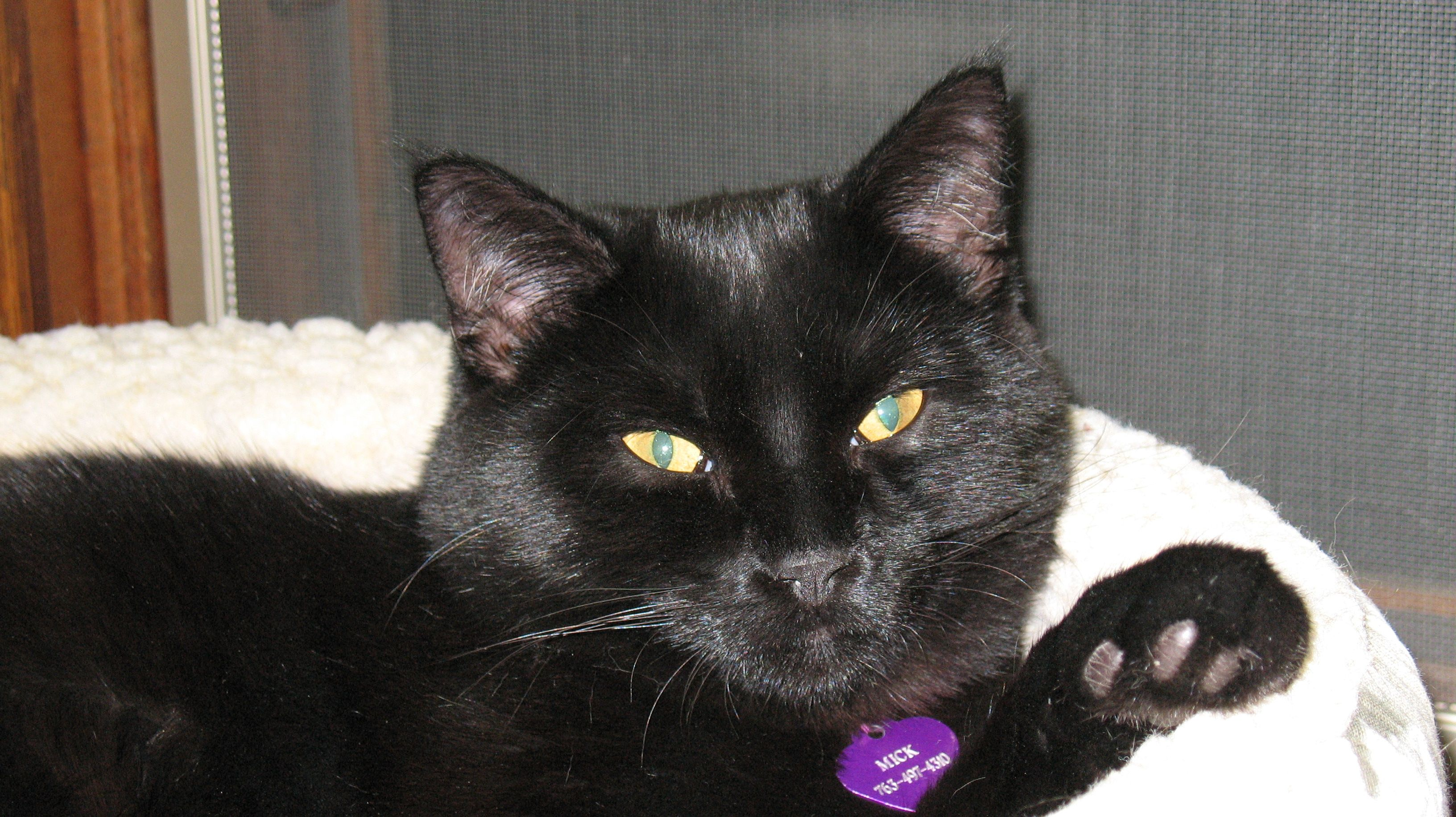 Mick Lost Missing From The Rec Center Area In St Michael Mn Since April 16 2011 Solid Black Gold Eyes 13 Not Dec Losing A Pet Pets St Michael
