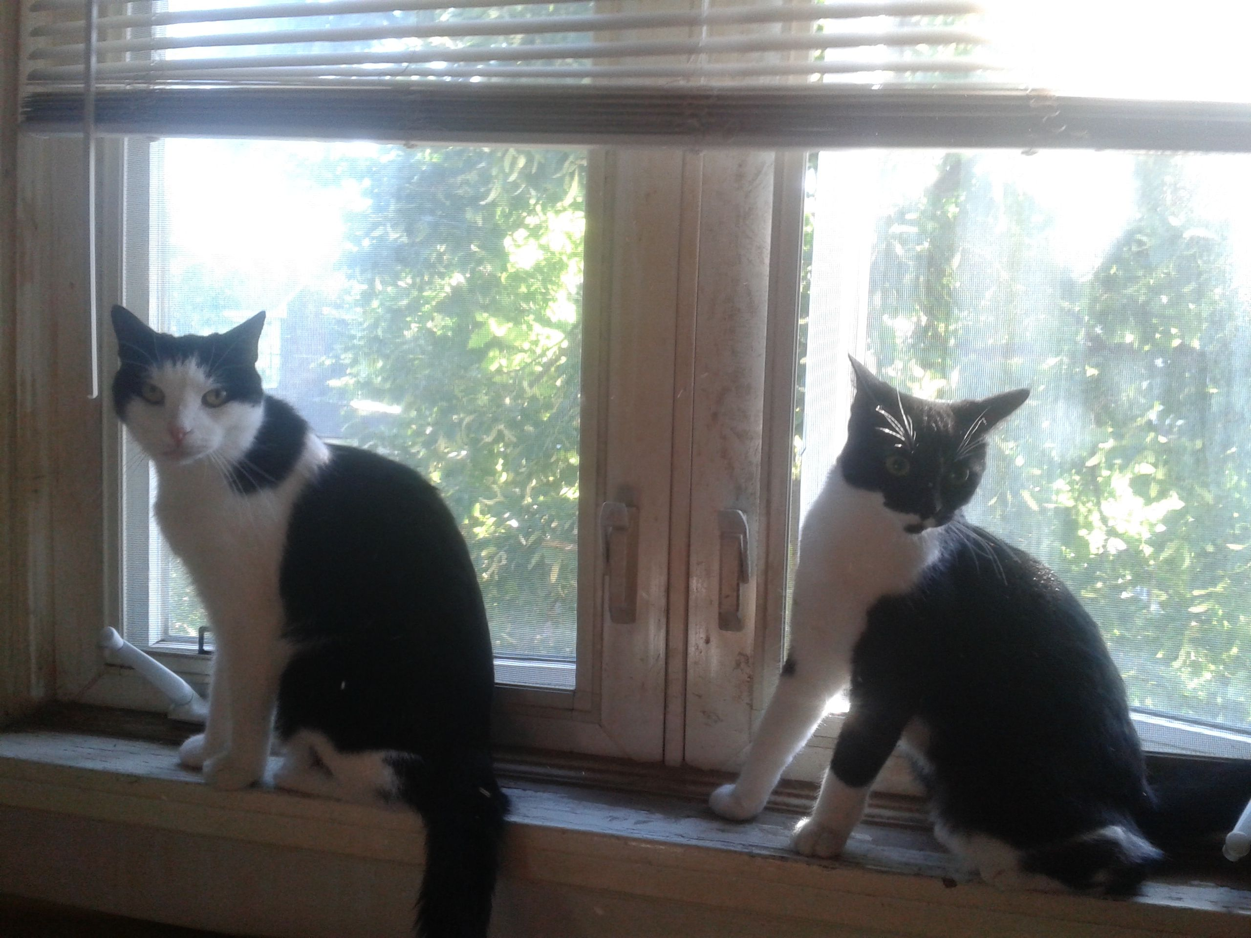 Pin On Black And White Cats