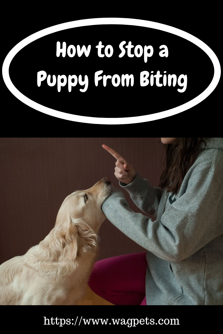 How To Stop A Puppy From Biting Puppy Biting Puppies Puppy