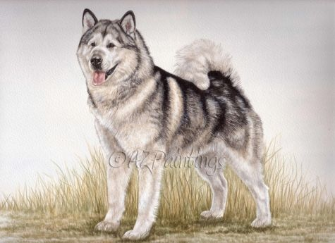 Alaskan Malamute Pet Dog Portrait By Artist Anne Zoutsos On