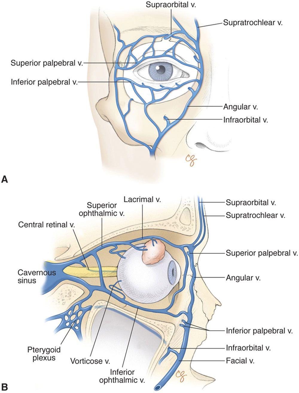 Excelente Anatomía Y Fisiología Humanas Concursos Composición ...