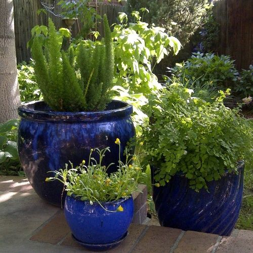 Simple Potted Plant Ideas   Potted Plant Ideas  Planting in containers   Grouping pots together  blue pots beautiful plants made for the shade  Flower  Pots. images of potted flowers   Potted Plant Ideas  Grouping Potted