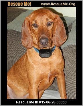 Redbone Coonhound Rescue Ohio Coonhound Redbone Coonhound Rescue