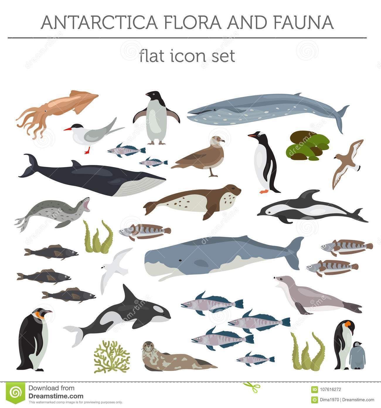 El Antartico La Antartida La Flora Y La Fauna Trazan Los Carteles De Animales Animales Fauna