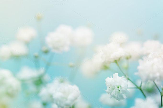 White flower on blue background by Liliia Rudchenko on - website storyboard