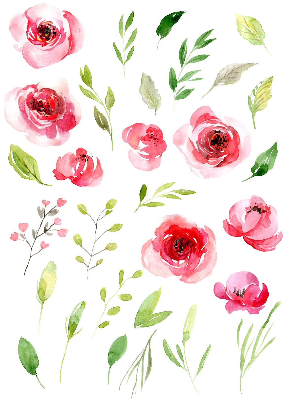 Watercolor Pink Roses Flowers Leaves Png 48989 Illustrations Design Bundles Watercolor Flowers Floral Watercolor Watercolor Rose