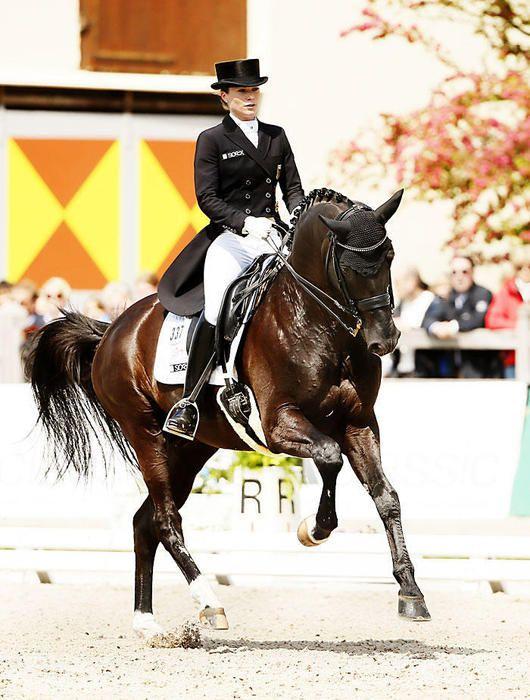 14 20 D1309c Kristina Sprehe Desperados Frh Hann Dressage Horses Dressage Horses