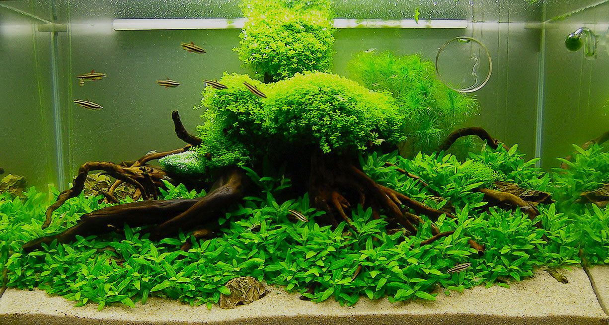Freshwater Aquarium Design Ideas size 1280x960 fish aquarium design ideas freshwater aquarium Best Design Idea Aquascape