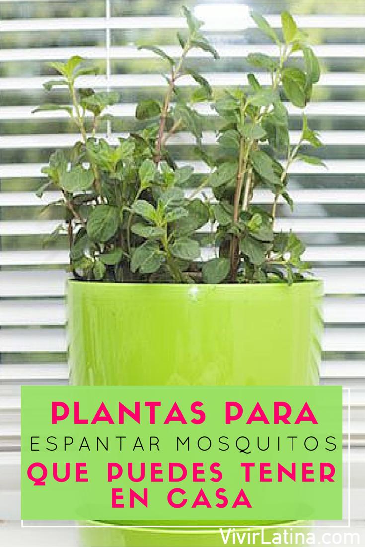 Plantas para espantar mosquitos que puedes tener en casa consejos pinterest - Plantas contra los mosquitos ...