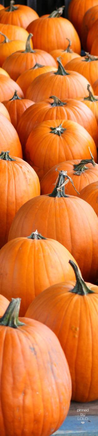 I ❤ COLOR NARANJA ❤ Pumpkins   LOLO❤︎