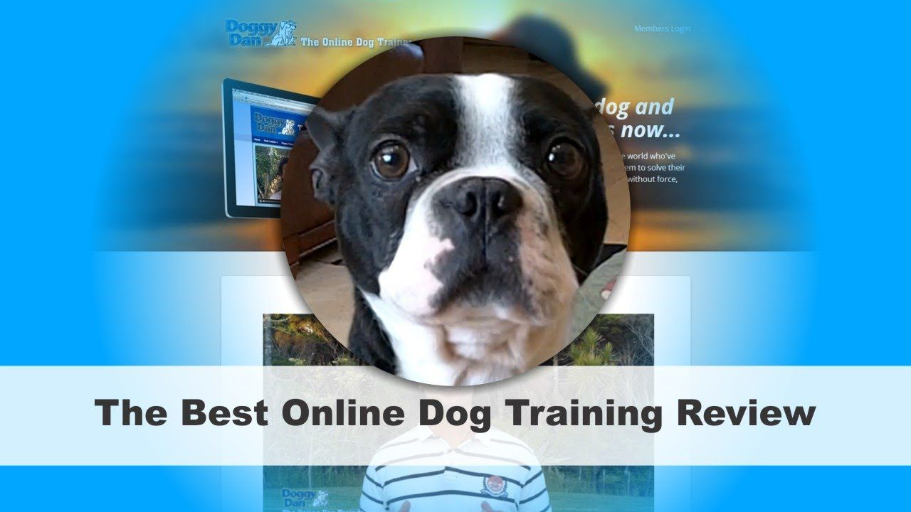 Online Dog Trainer Review | Best Dog Training Courses Online (+playlist)