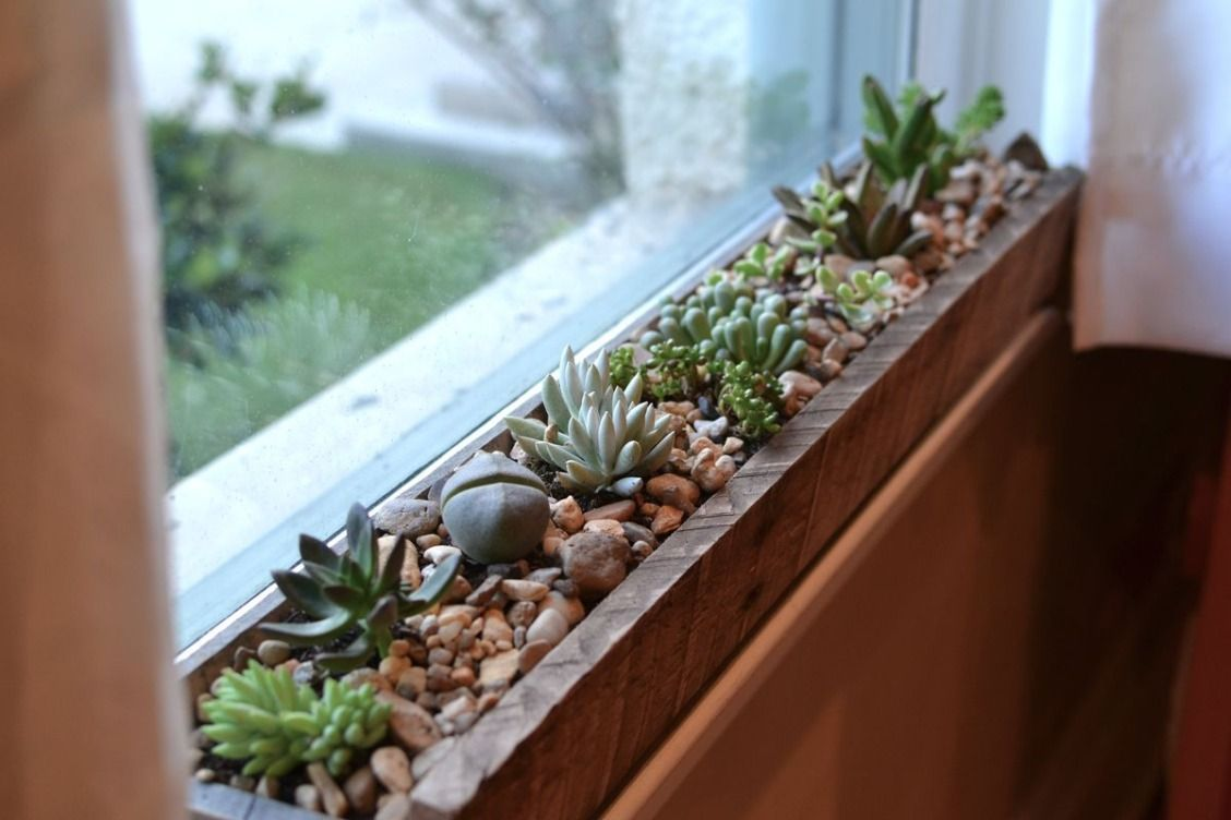 beautiful succulents kitchen design kitchen decor and room decor