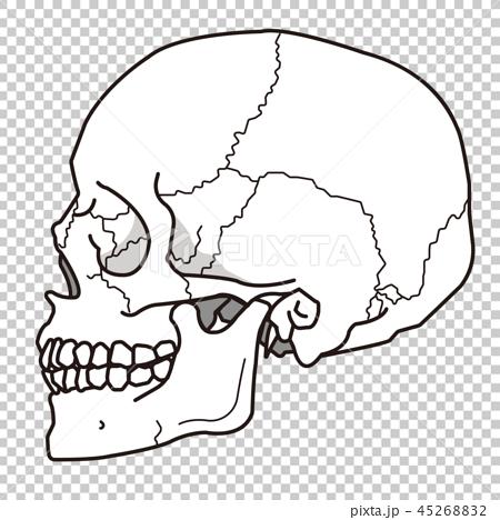 イラスト素材 頭蓋骨 側頭部 太線バージョン ガイコツ イラスト 頭蓋骨 スカルデザイン