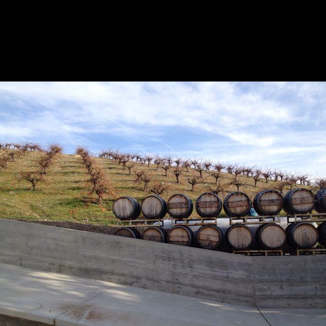 Old estate vines.
