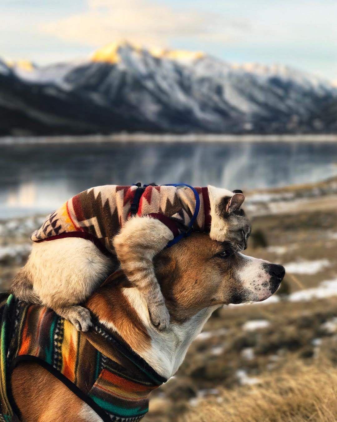 Photo de l'album Henry The Colorado Dog (Henry & Baloo