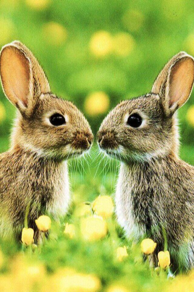 iPhone Wallpaper - Easter tjn   iPhone Walls 1   Animals ...
