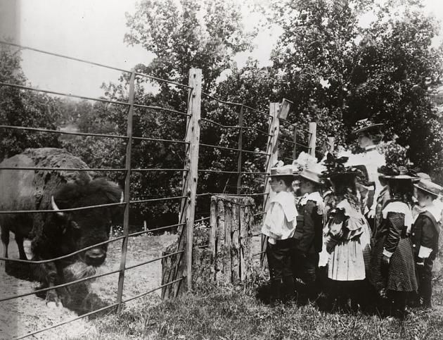 School Children Viewing the First Bison at the National Zoo, by Frances Benjamin Johnston, 1899, Smithsonian Institution Archives, Image #2003-19498.