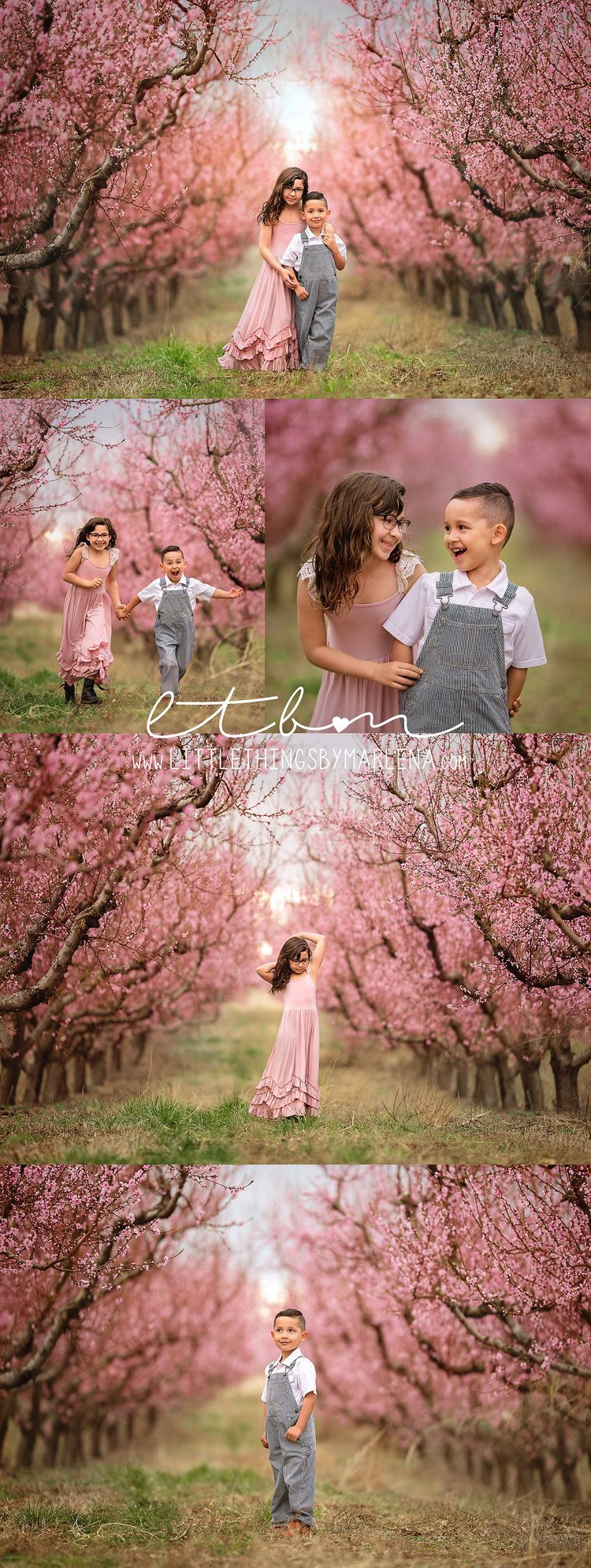 Spring Blossoms Cherry Blossom Session Orchards Photoshoot Pink Blooms Flowy Dress Sib Cherry Blossom Pictures Spring Family Pictures Spring Portraits