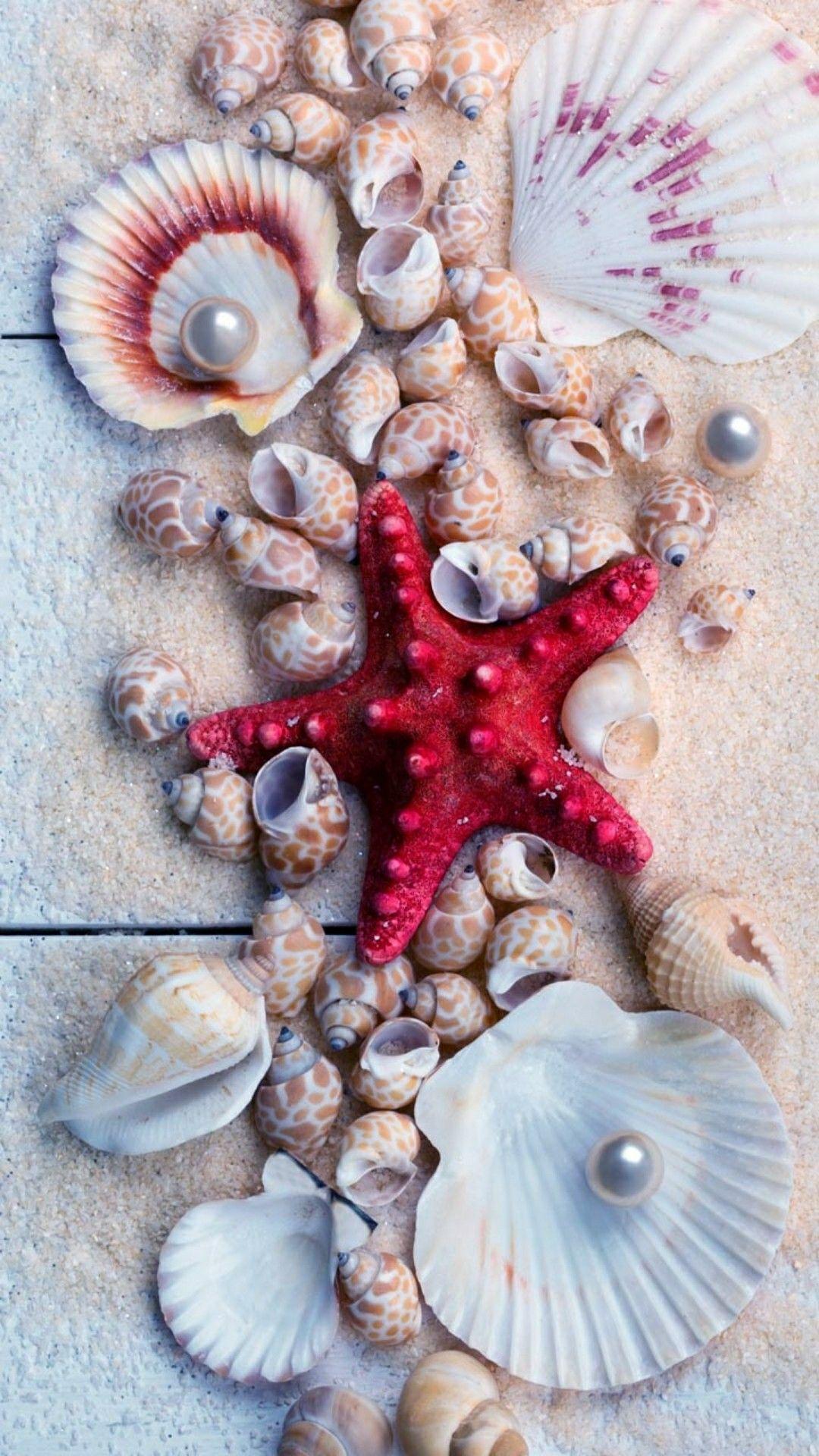 Pin By Marion Tsai On Seashells Summer Wallpaper Flower Background Wallpaper Ocean Wallpaper