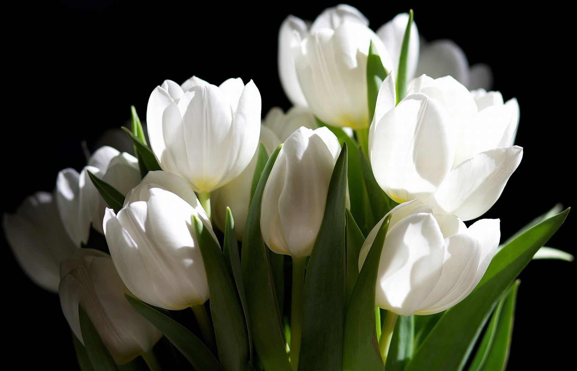 White flowers 10 flowers gallery flower pinterest white white flowers 10 flowers gallery izmirmasajfo