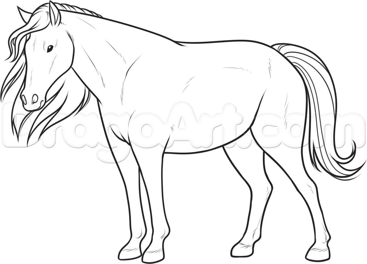 How To Draw A Horse For Beginners Step 11 Drawing Pinterest