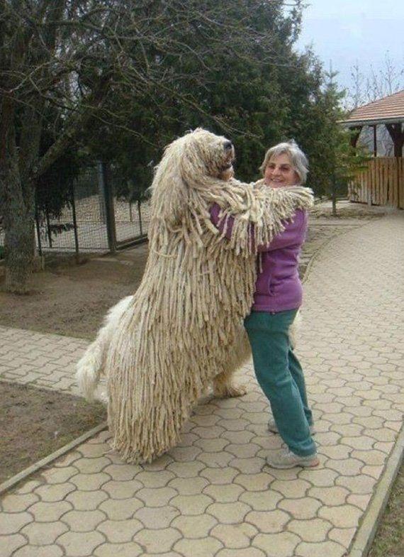 Photo of 20 fotos de perros que no saben qué tan grandes son realmente