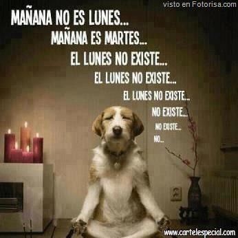 Pin By Mari Vaz On I Love Dogs Spanish Jokes Spanish Memes New Memes
