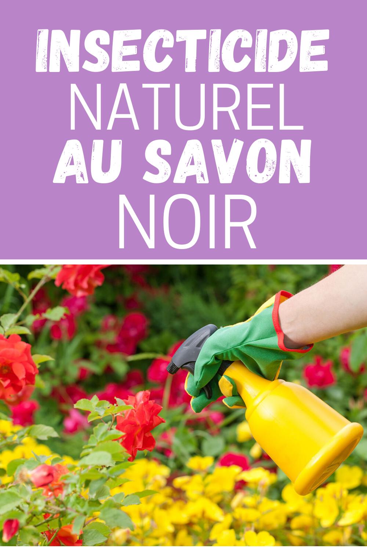 Insecticide Naturel Au Savon Noir En 2020 Insecticide Naturel Insecticide Savon Noir