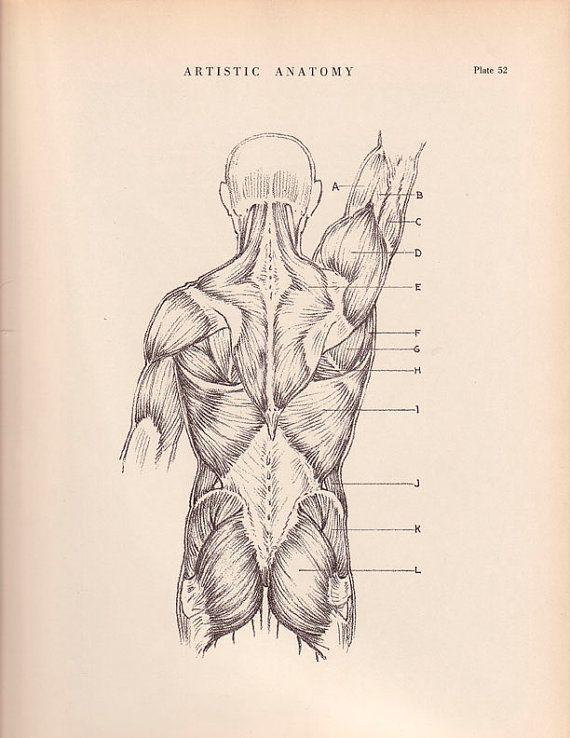 Human Back Muscles Print 9 x 12 Anatomy Drawing by AgedPage ...