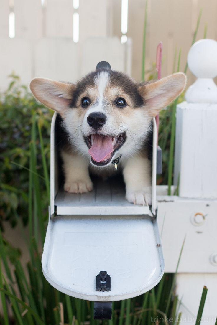 Puppy delivery service ohio