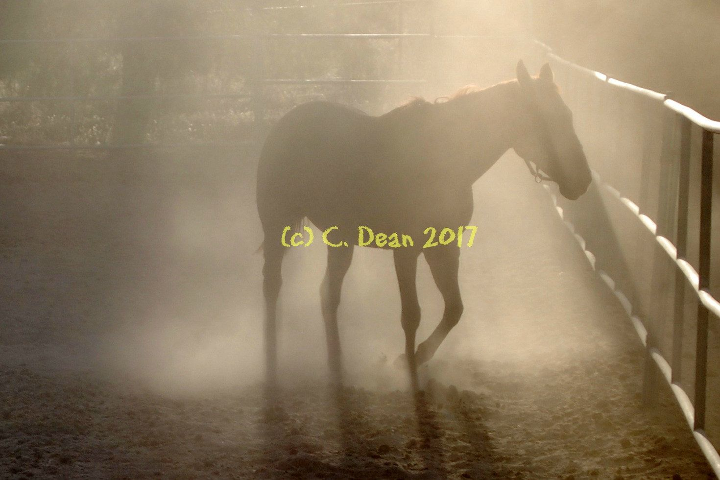 Horse, dust, silhouette, horse silhouette, late afternoon, 5x7 color ...
