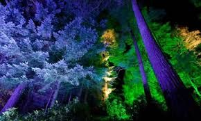 forest disco event - Google Search