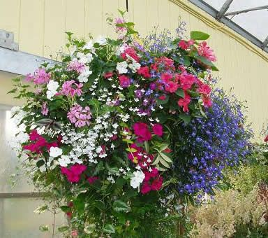 Hanging basket garden ideas i like pinterest - Flowers hanging baskets porches balconies ...