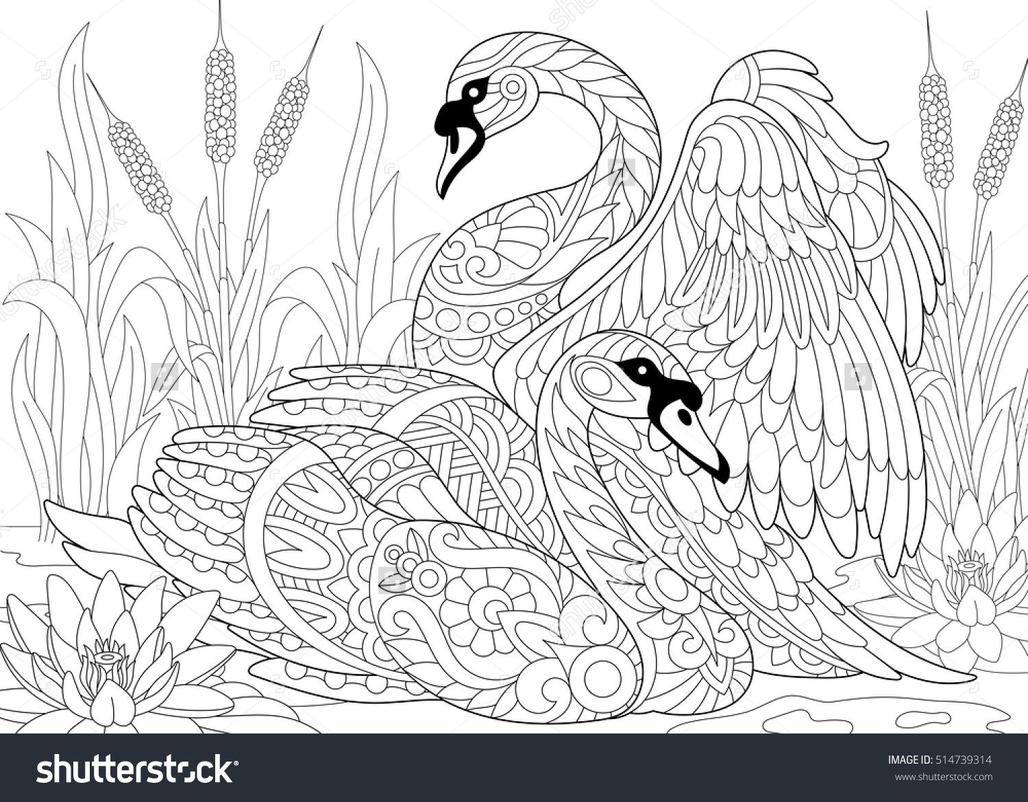 Water lily flower coloring pages - Stylized Couple Of Two Swans Among Lotus Flowers Water Lilies And Pond Plants